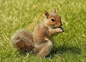 squirrel-5