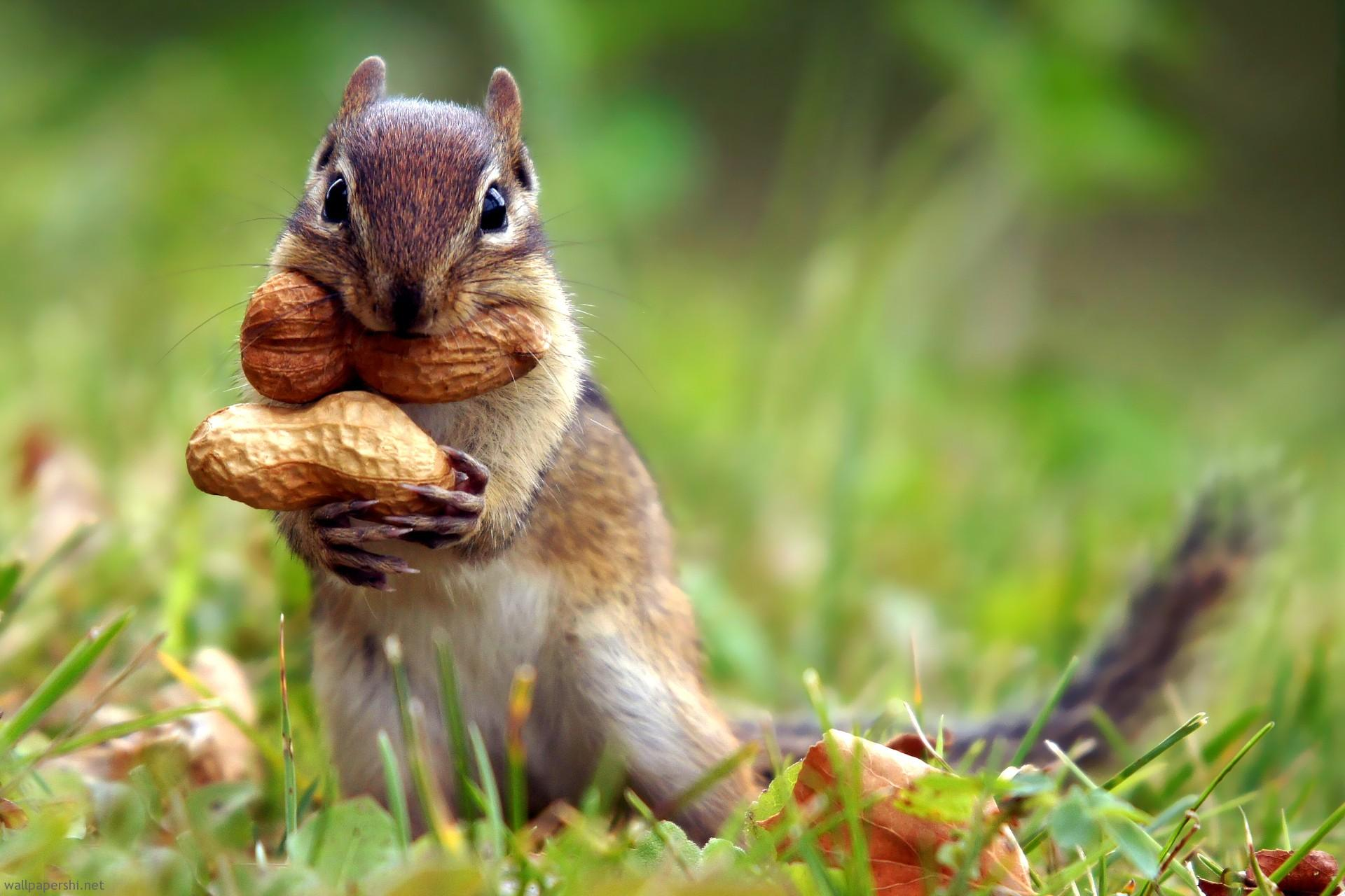 squirrel-nut-cute-animal-nature-grass-1920x1280