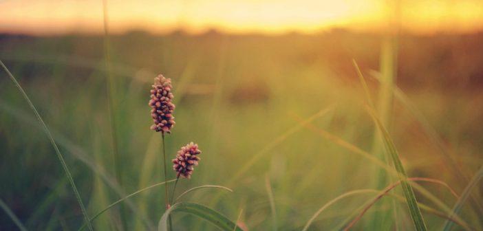 Impacter's Choice | Summer Reminiscing