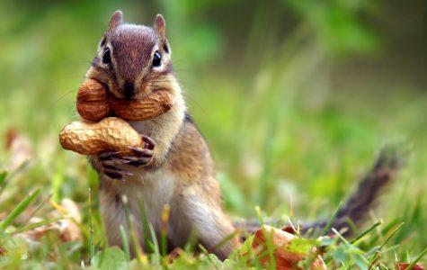 Special Report: Squirrels on campus