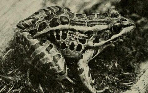 Frogstrap | Viagra Boys