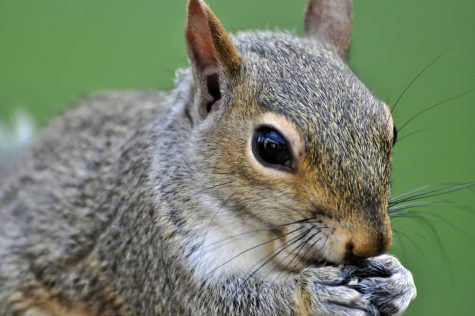 Playlist | Songs for Serenading the Campus Squirrels