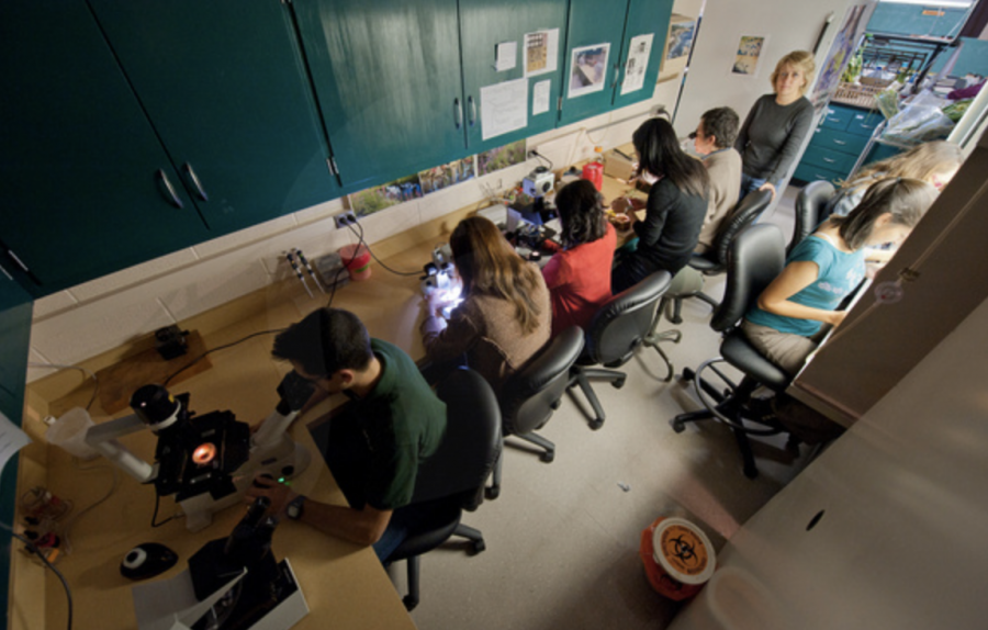 A group of MSU students study together in a lab/ Photo Credit: MSU Athletic Communications